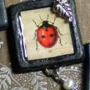 ladybugsquare