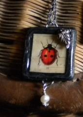 ladybug450front